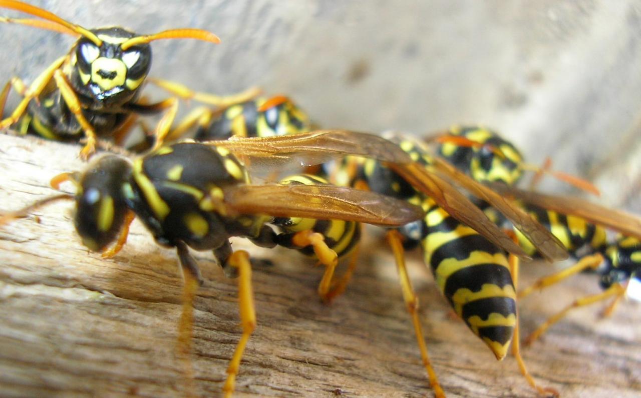 Resultado de imagen de insectos calor