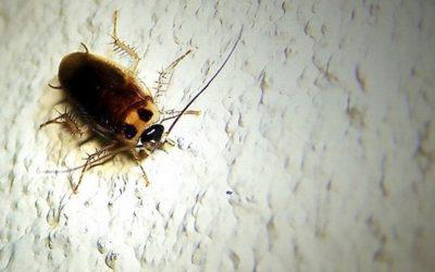 ¿Cuáles son las plagas más comunes a las que puedes enfrentarte?