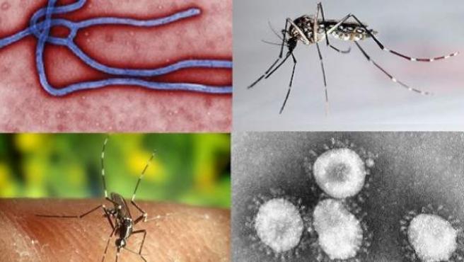 Dengue, ébola, malaria, chikungunya... estos son los efectos de ...