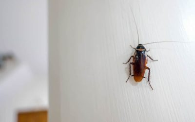 ¿Qué atrae a las cucarachas a tu casa?