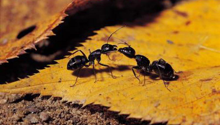 Resultado de imagen de what eat ants
