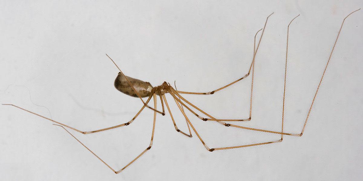 Resultado de imagen de patas de una araña