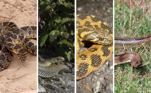 """Resultado de imagen de serpientes control de plagas"""""""