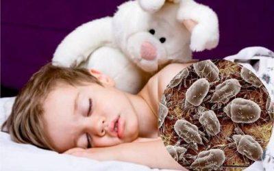Características y prevención de los ácaros del polvo