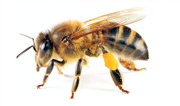Resultado de imagen de control abejas