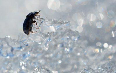 Eliminar plagas en invierno, todo lo que debes saber