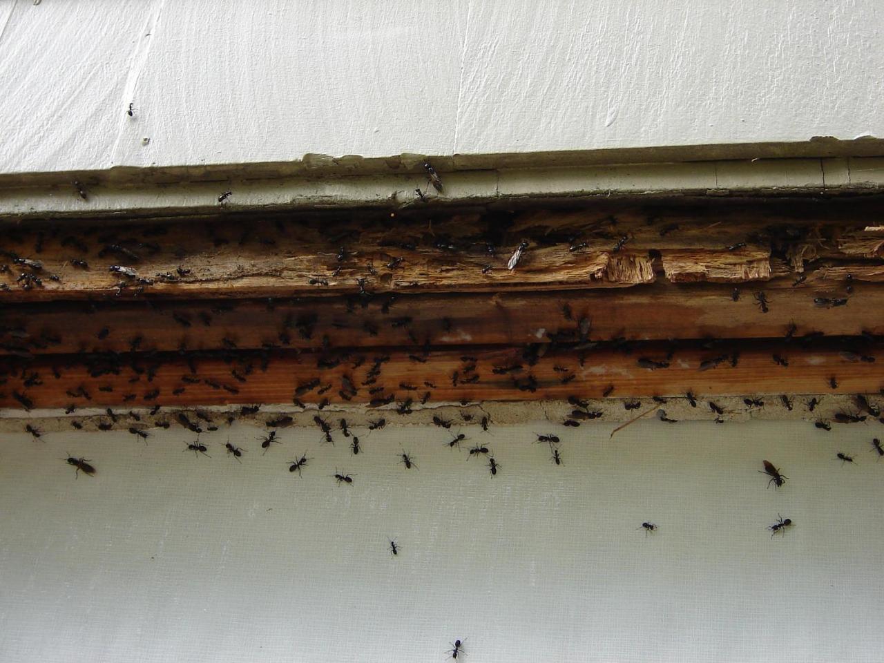 Resultado de imagen de ants kitchen