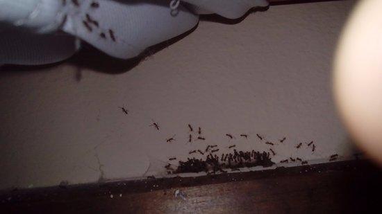 Resultado de imagen de hormigas cocina
