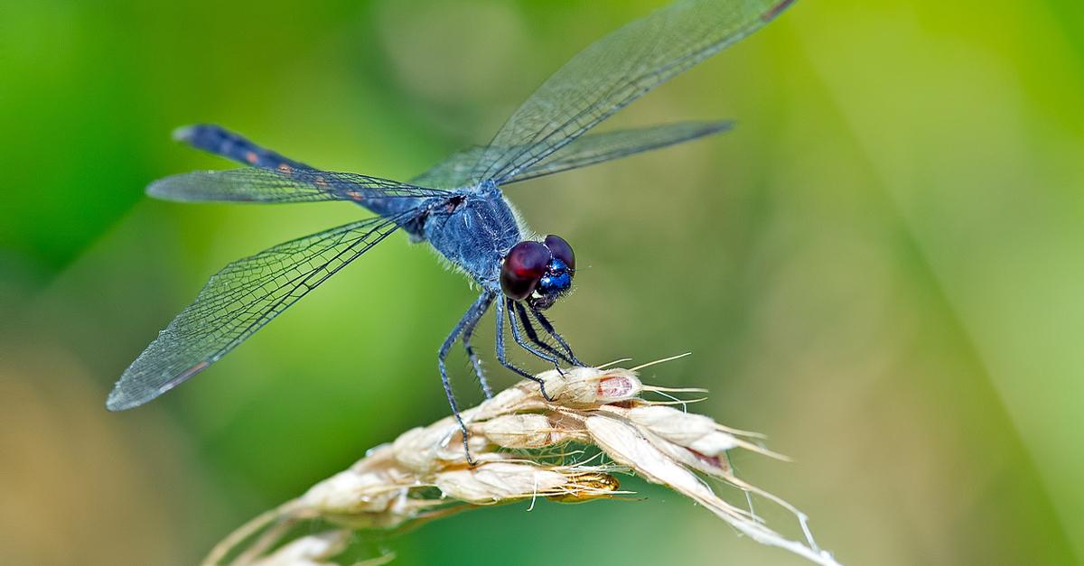 Resultado de imagen de insectos extinguir