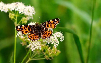 La extinción de los insectos, un problema que amenaza a todo el planeta