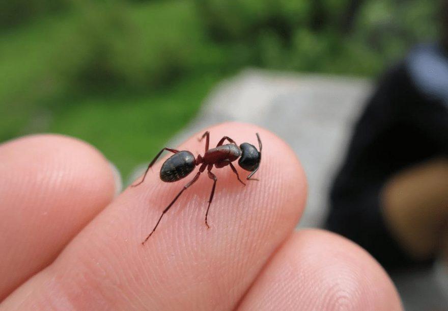 Do Ants Sting?   Lloyd Pest Control