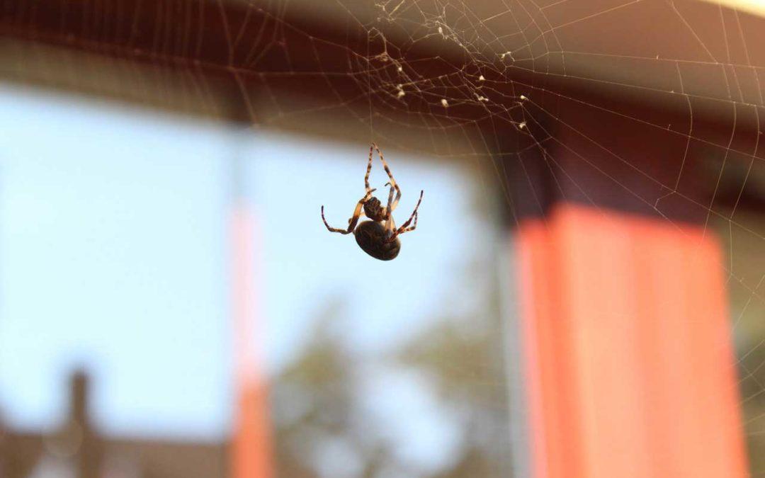 Cómo eliminar las arañas en casa   Zotal