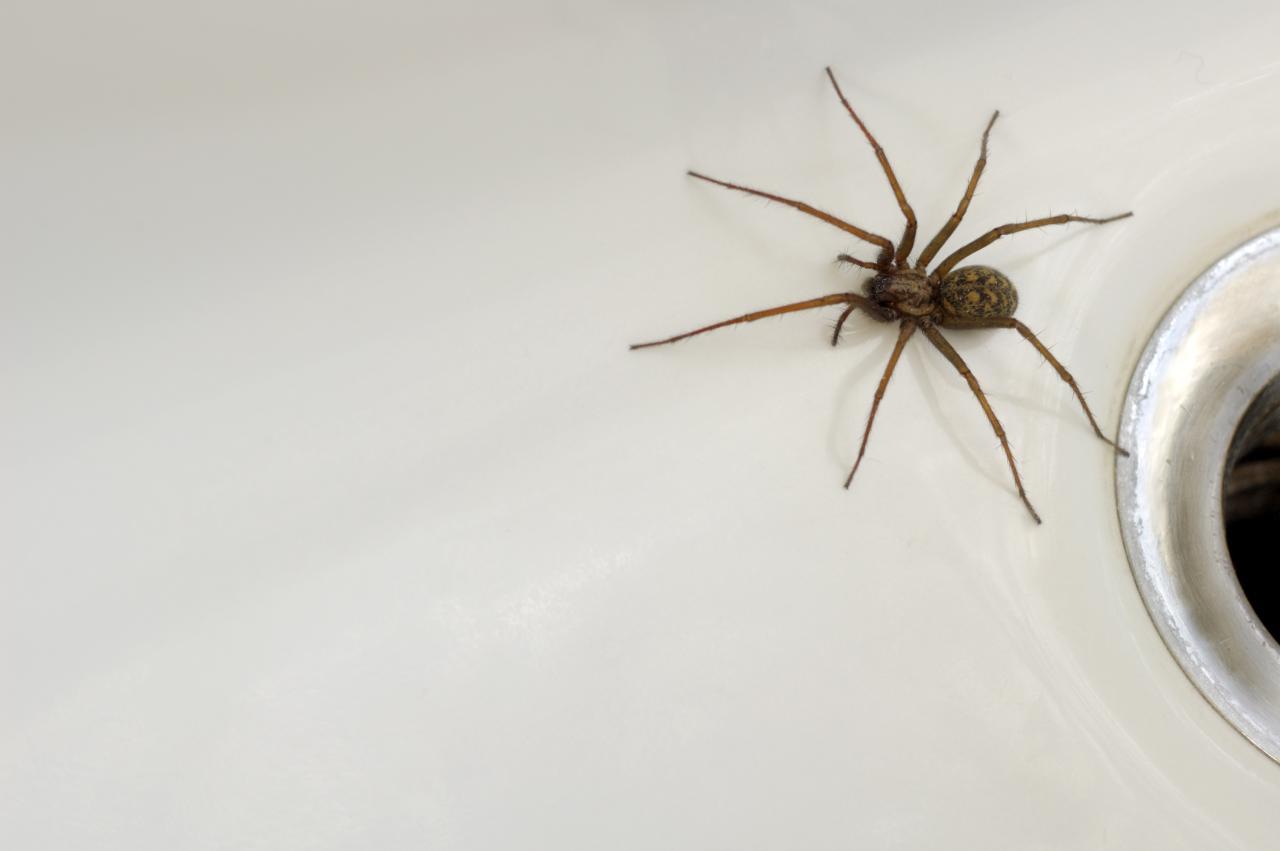 Rocía esto en tu casa y JAMÁS volverás a ver arañas en tu casa
