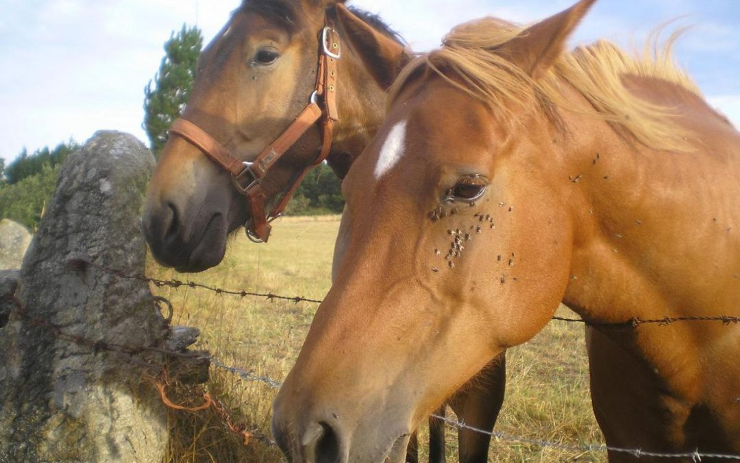 Plagas e insectos que pueden afectar a los caballos