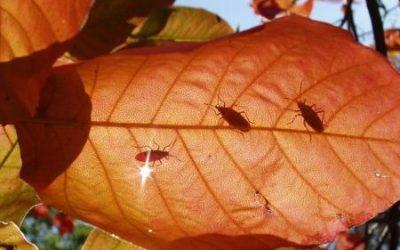Preparándonos para el otoño, control de plagas