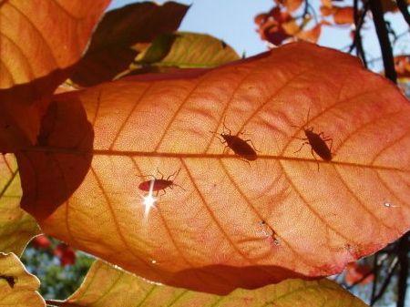 Resultado de imagen de pests autumn