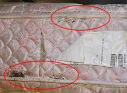 Resultado de imagen de bed bug signs