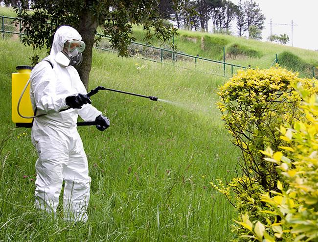 Uso de fitosanitarios (de manos de un profesional)